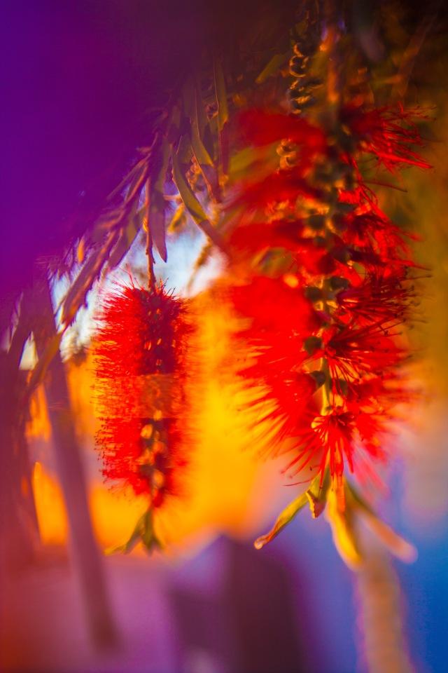 Photogray by artist Charles Mackenzie